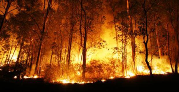 Kebakaran Hutan Riau. FOTO/VSIMIRACLE